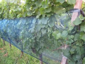 Weinnetz 2