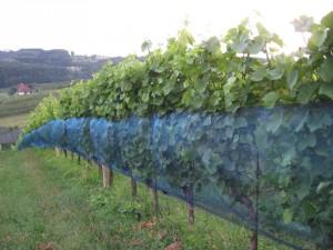Weinnetz